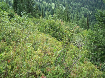 huckleberry-patch-2