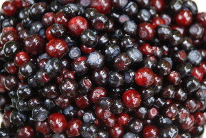 800px-Vaccinium_membranaceum_Fruit