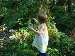 Best Spots in Idaho to Pick Huckleberries